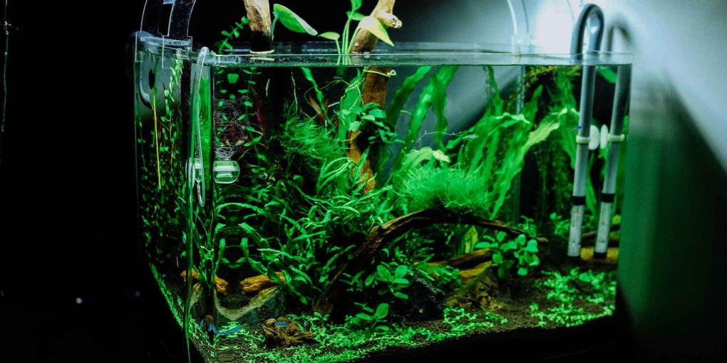 How-to-fix-a-leaking-Aquarium-Bulkhead-on-TheSunrisePost