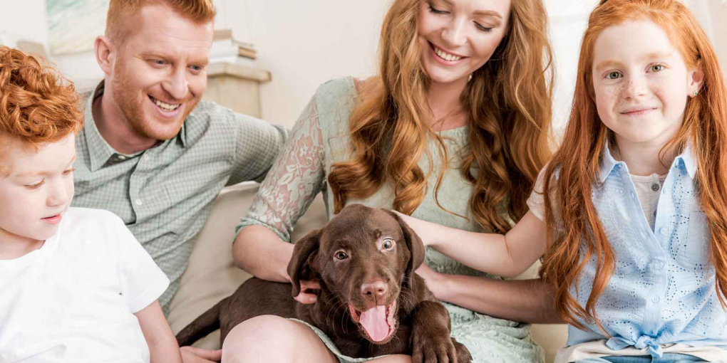 The-Checklist-Every-New-Pup-Parents-Must-Follow-on-TheSunrisePost
